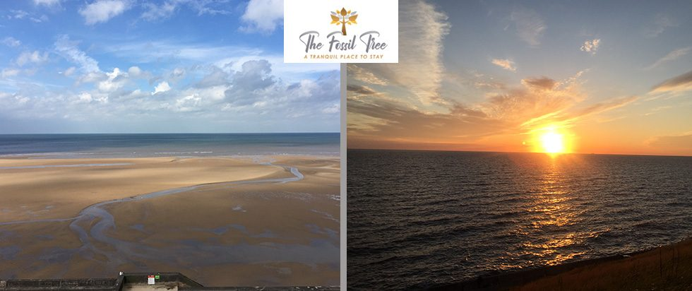Views From Blackpool Fossil Tree Hotel