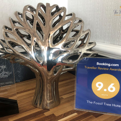 Best Seaview Guest House Of The Year Award Blackpool Fossil Tree