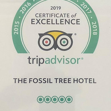 Certificate Of Excellence Award from TripAdvisor For Fossil-Tree-Blackpool